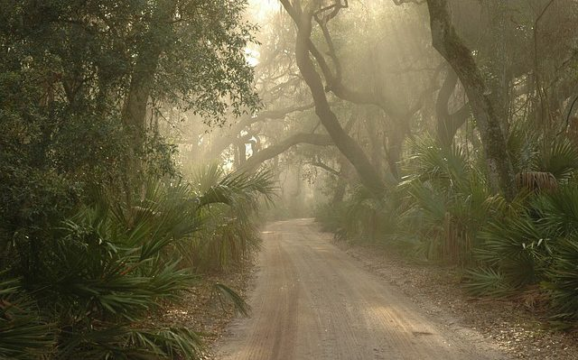 A misty path in the woods