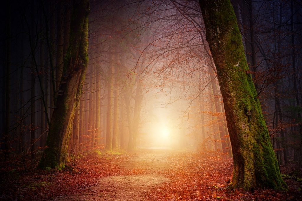 a path in the forest leading toward the light