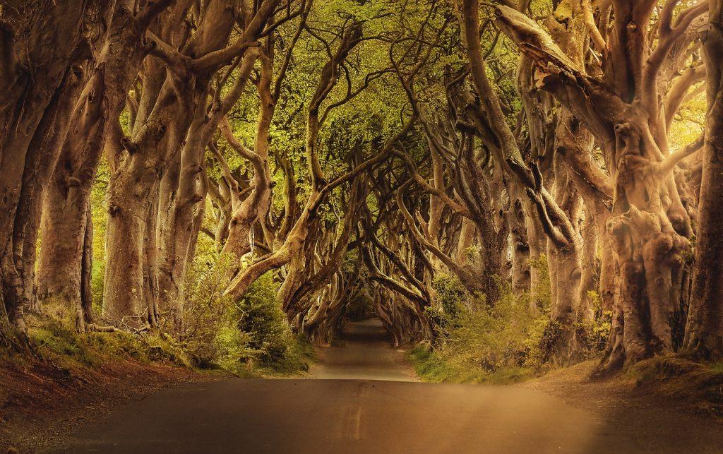mangled forest